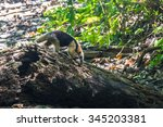 Ant Eater Searching For Food I...