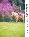 Wild Horse In Garden With Pink...