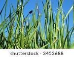 grass  5   Shutterstock . vector #3452688