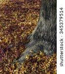 Carpet Of Fallen Green Leaves...
