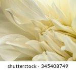 White Dahlia Petals Macro ...
