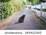 Stock photo cat with personality 345422345