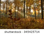 autumn in the forest beautiful... | Shutterstock . vector #345425714