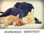 Stock photo kitten and puppy 345477077