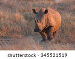 White Rhinoceros  Ceratotheriu...
