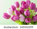 Beautiful Purple Tulip Flowers...