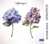 hydrangea and leaves ... | Shutterstock .eps vector #345635915