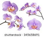 Set Of Violet Orchid Flowers...