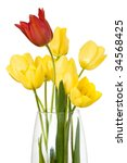yellow and red tulip flowers isolated with clipping path - stock photo