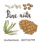 pine nuts and pine cones. hand... | Shutterstock .eps vector #345724799