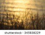 fodder   Shutterstock . vector #345838229