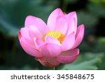 Lotus Flower And Lotus Flower...