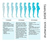 infographic of pregnant woman... | Shutterstock .eps vector #345874991