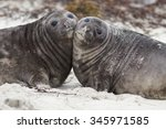 Southern Elephant Seal Pups ...