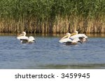 group of white pelicans ... | Shutterstock . vector #3459945