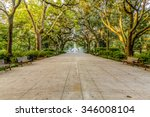 Walkway Under Southern Oaks...