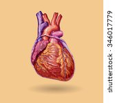 human heart vector . realistic... | Shutterstock .eps vector #346017779