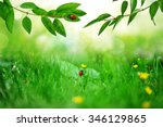Sunny Green Field With Ladybugs