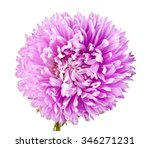 flower is isolated on a bklom... | Shutterstock . vector #346271231