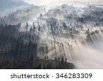 Stock photo sunrise in the forest near bromo volcano java island indonesia 346283309
