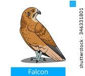 Falcon Bird Learn Birds...