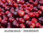Ripe Juicy Autumn Cranberries...