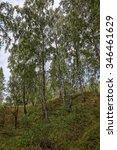 birch trees in a ravine against ...   Shutterstock . vector #346461629