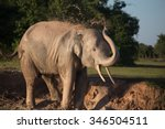 Elephant Taking Mud Bath