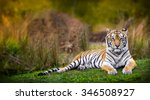 tiger stare | Shutterstock . vector #346508927