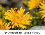 insect on colorful flower in... | Shutterstock . vector #346644497