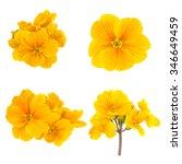 Yellow Spring Flowers Primrose...