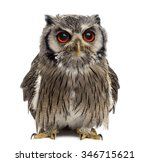 Stock photo northern white faced owl ptilopsis leucotis year old in front of a white background 346715621