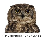 Stock photo close up of a spotted eagle owl bubo africanus years old in front of a white background 346716461