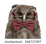 Stock photo close up of a verreaux s eagle owl bubo lacteus years old wearing glasses and a bow tie in 346717397