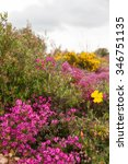 heather and flowering shrubs...