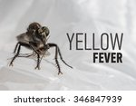 scary insect and the... | Shutterstock . vector #346847939