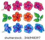 hibiscus vector leaves and... | Shutterstock .eps vector #346948397