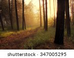 dawn in the forest | Shutterstock . vector #347005295