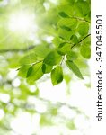 green leaves over green... | Shutterstock . vector #347045501