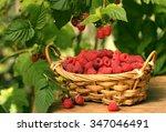 Raspberry Bush  Raspberry Basket