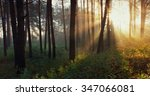 dawn in the forest | Shutterstock . vector #347066081