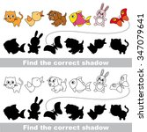 pets collection. find correct... | Shutterstock .eps vector #347079641