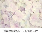 Hydrangea Flowers For Abstract...