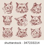 Hand Drawn Sketch Set Cats....