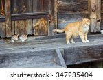 Red And White Cat With Small...