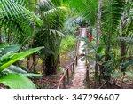 small wooden bridge in a lush...   Shutterstock . vector #347296607