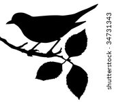 Vector Silhouette Of The Bird...
