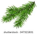 fir branch. isolated on white... | Shutterstock .eps vector #347321831