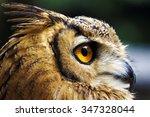 Bird\'s Eye View. A Close Up...