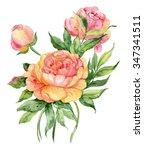 watercolor flower peony | Shutterstock . vector #347341511